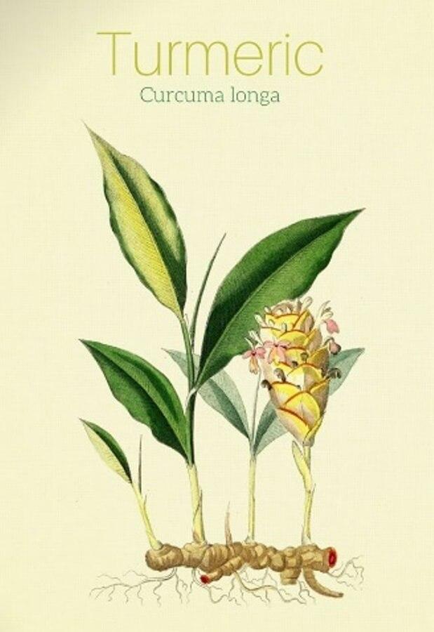 gyógynövények artrózis és